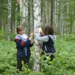 исследование антропогенной нагрузки на лесные массивы