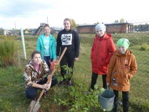 посажено 15 кустов смородины и 8 вишен на пришкольном участке, 6 кустов жасмна на территори школы